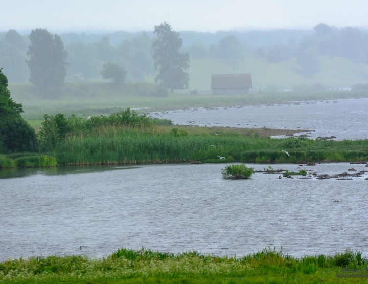 In the backlog: Rainy day at Hornborga lake