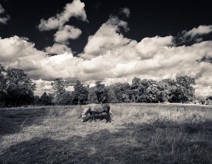 Monochrome Swedish Landscapes