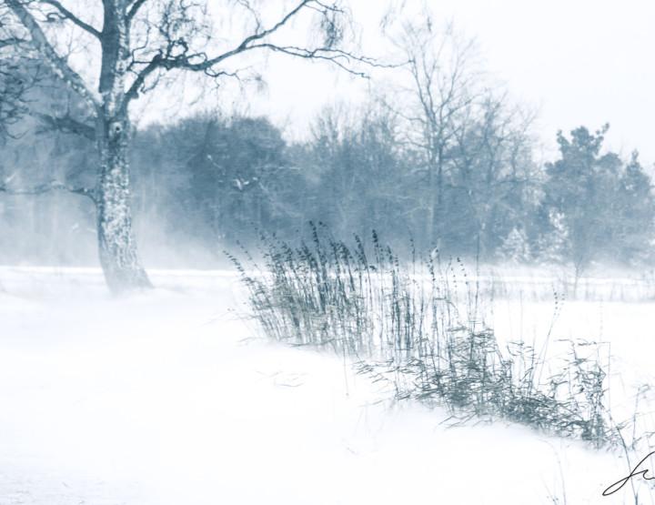 A bit of a winter